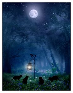 The Witches Cats by ArwensGrace (print image) Northern Lights, Cats, Aurora Borealis, Aurora