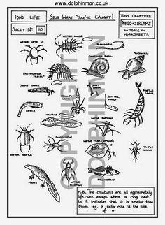 Animal Tracks Identification Chart Identification key