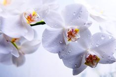 50 Orchids in 2 Minutes #orchids #flowers #beauty #nature