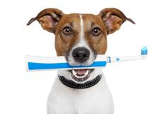Common Dental Problems in Pets