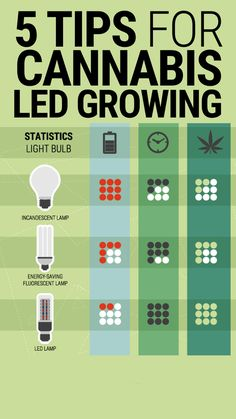 Make the most of your leds: 5 tips for cannabis led growing.  The growing prominence of LED grow lights in the cannabis community is undeniable. So we have put together a few tips for anyone wanting to give them a go.