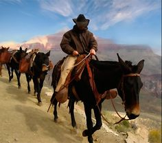 Cowboy in Water color Phantom Ranch Mule Train Grand Canyon Arizona