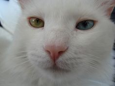 KT up close and personal. Green Eyes, Cool Cats, Animals, Parks, Animales, Animaux, Animal, Animais