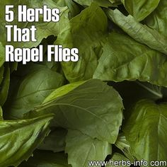 ❤ Before you spray your home with poisons, give these herbs a try. They also deter a number of other insects. Click the link to learn what they are, and please share! ❤