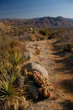 California - desert PCT - Pacific Crest Trail Association - Photo Gallery