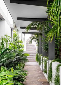 Drinking in iconic harbour views, a newly built home looks as if it has been in place forever thanks to the lush gardens that enfold it. Tropical Garden Design, Tropical Landscaping, Tropical Houses, Tropical Gardens, Tropical Plants, Modern Tropical House, Pool Plants, Exotic Plants, Entrance Design