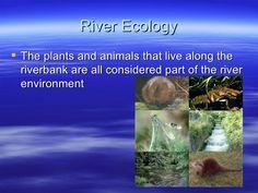 ecology - Google Search