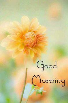 Good Morning Monday Images, Latest Good Morning Images, Good Morning Nature, Good Morning Cards, Good Morning Greetings, Good Morning Good Night, Good Morning Photos Download, Good Morning Flowers Pictures, Good Morning Beautiful Pictures
