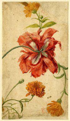 Jan van Huysum, flower study