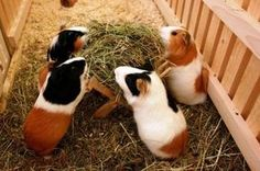 hungry pigs, plz stand up?