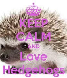 KEEP CALM AND Love Hedgehogs...  sd.keepcalm-o-matic.co.uk