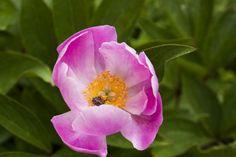 140420-spring garden-020