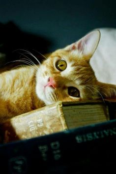 """""""Read me a story, then tuck me in tight. Tell me you love me, then kiss me goodnight."""" --Anonymous"""
