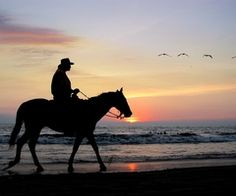 We rode horses and donkeys up the mountains of Puerto Vallarta. It was exhilarating. Puerto Vallarta, Vallarta Mexico, Equestrian Outfits, Equestrian Style, Equestrian Fashion, Ohio, Types Of Horses, Horse Accessories, Riding Lessons