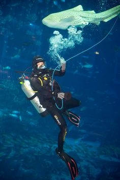 A communication rope allows the diver's voice to be transmitted to the guests at S.E.A. Aquarium's Deep Sea Dialogue.