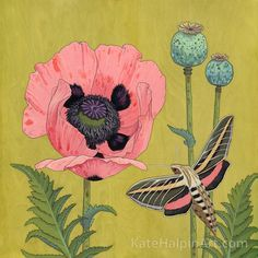 The Enchanted Sphinx Moth  by Kate Halpin