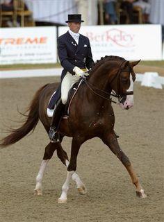 #dressage #horse #equine