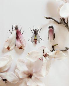 Kari Herer Photography: Magnolia bug no. 4334. $30.00, via Etsy.