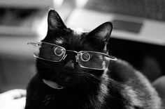 45 Cats Wearing Glasses | The glasses really bring out my eyes.