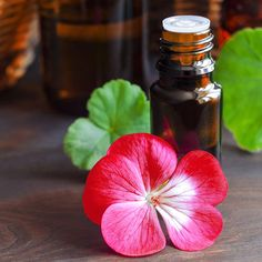 Geranium Essential Oil Uses: 5 Healing Properties - Geranium Essential Oil Uses: 5 Healing Properties - Geranium Oil, Geranium Essential Oil, Essential Oils For Skin, Essential Oil Uses, Arthritis, Calming Oils, Oil Benefits, Paranormal, Wound Healing