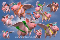 flying pigs - Bing Images