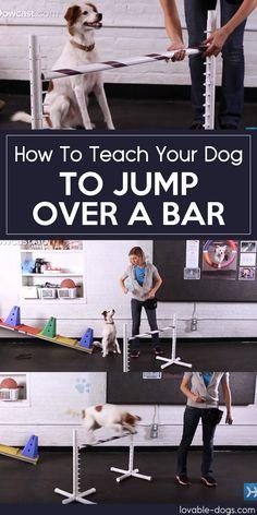 How To Teach Your Dog To Jump Over A Bar►►http://lovable-dogs.com/how-to-teach-your-dog-to-jump-over-a-bar/?i=p