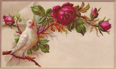 Antique Images: Free Printable Label: Vintage Label with White Dove and Red Rose