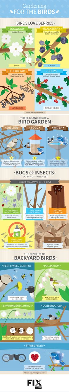 If you love bird watching, this #infographic is for you! You'll learn exactly what to plant in your yard to attract birds.
