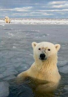 An Icy Bath!