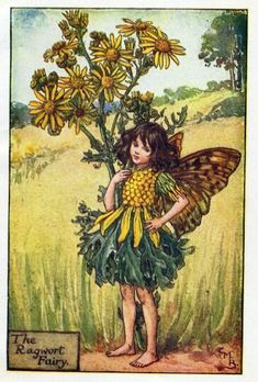 "Vintage print 'The Ragwort Fairy' by Cicely Mary Barker from ""The Book of the Flower Fairies""; Poem and Pictures by Cicely Mary Barker, Published by Blackie & Son Limited, London [Flower Fairies - Summer] Cicely Mary Barker, Flower Fairies Books, Fairy Pictures, Vintage Fairies, Beautiful Fairies, Fantasy Illustration, Art Abstrait, Fairy Art, Oeuvre D'art"