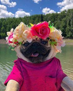 Super Cute Animals, Cute Little Animals, Cute Funny Animals, Doug The Pug, Cutest Puppy Ever, Cute Pugs, Old Dogs, Pug Love, Bulldog Puppies
