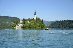 Swimmers heading to Lake Bled island.