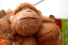coconut monkeys | Recent Photos The Commons Getty Collection Galleries World Map App ...