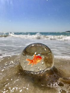 A day at the beach with my Goldfish - Best Pins Live Moonlight Photography, Glass Photography, Macro Photography, Creative Photography, Amazing Photography, Photography Courses, Photography Zine, Photography Flowers, London Photography