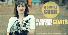 Best article ever on raising, buying, and milking goats