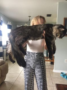 My cat is on the larger side. http://ift.tt/2ez5VIW