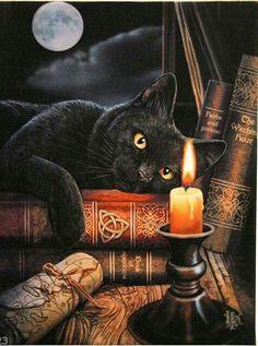 Black cat on Halloween
