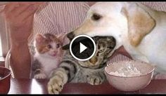 http://www.guardalo.org/funny-dogs-annoying-cats-10256/1666842422/