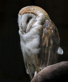 Owl by Olga Titova, via 500px
