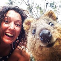 1000+ images about Quokkas: Australian animal, my new ...