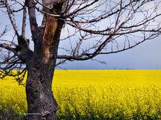 Photographis: Bäume. Betrachtungen und Gedichte