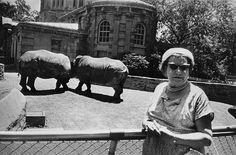 "Gary Winogrand - from his ""Animals"" series"