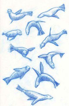 sea lion tattoo designs
