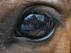 """Horse Eye by alexfel, via Flickr. """"Reflection in the eye of a horse in the…"""