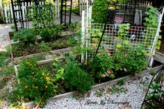 Gentle Joy Homemaker: Small Garden-Companion Planting Part 4