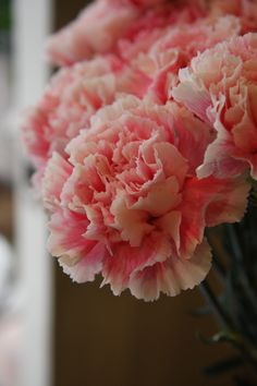 carnation Misty, underestimated in my opinion