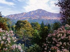 """Mount Diablo Poppies"" by Debbie Wardrope"