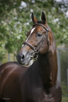 The late, great Hickstead. Headshot by Dirk Caremans