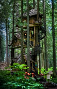 Three Story Tree House - British Columbia Canada