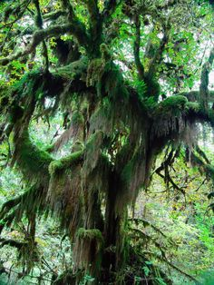 Names of Rainforest Trees | Forest Trees (2014, point-and-shoot, shot, photos)